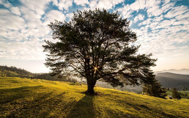 ხის ჯიშების შესახებ